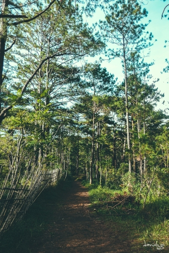 One of my happy place in Baguio - The CJH Eco Trail. But alas, the trail has not been maintained for years and is now unpassable for a casual hiker like me :( (Sony RX100M4)