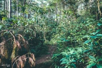 CJH Eco Trail :( (Sony RX100M4)