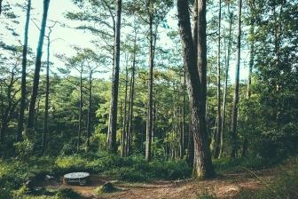 Rest stop - CJH Eco Trail (Sony RX100M4)