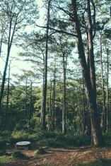 Taking a breather... CJH Eco Trail (Sony RX100M4)