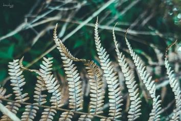 Dried leaves - CJH Eco Trail (Sony RX100M4)